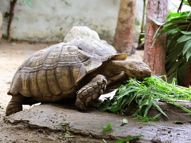 Korytnačka počas kŕmenia