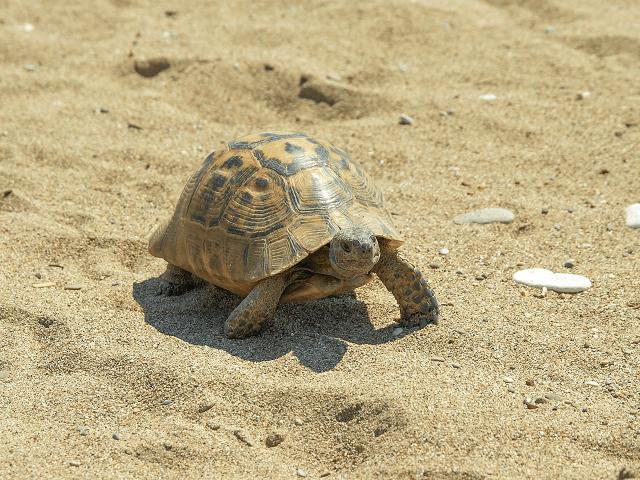 Korytnačka v piesku