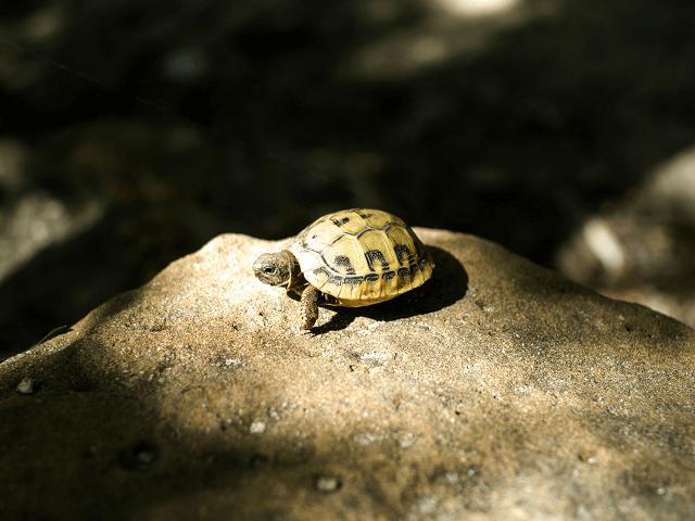 Korytnačka sa vyhrieva na skale